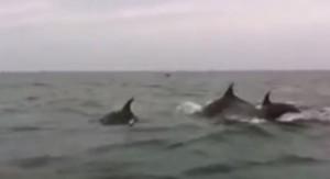 dauphin-touquet